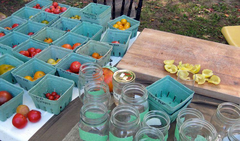 Tomato-tasting-jars