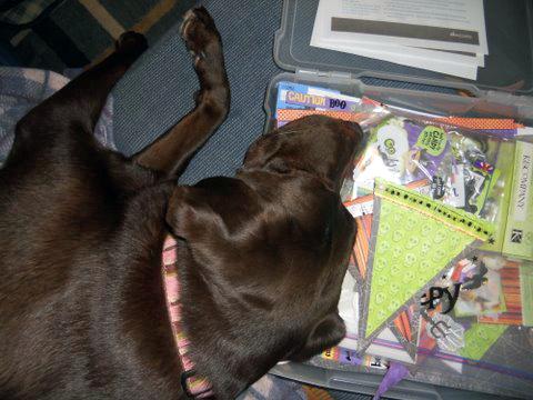 Zoe sleeping on scrapbox