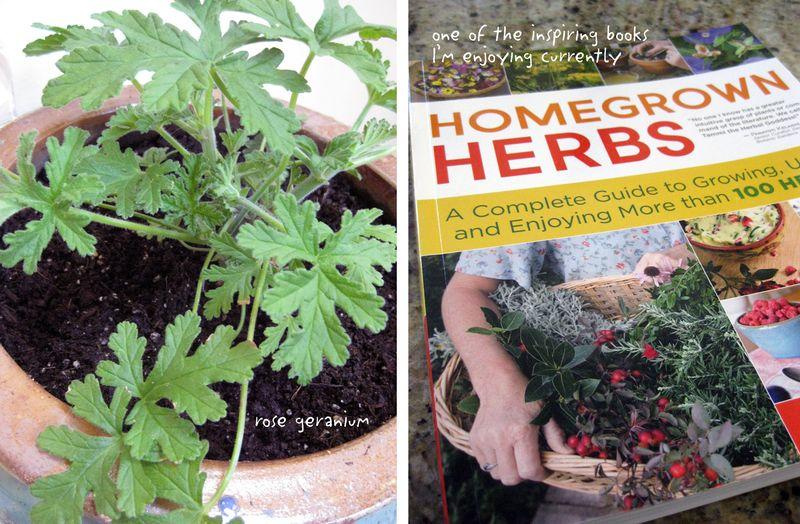 KP-herb-book